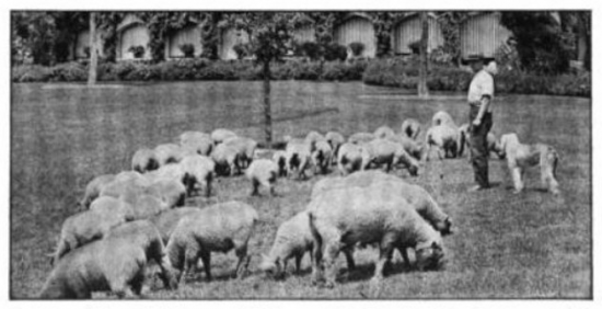 1918 aug cla rockefeller shepherd archie fawkes at rockwood hall w oes jpg 1
