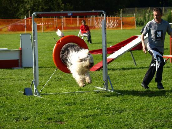 Bobtail agility