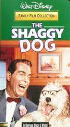 Shaggydog